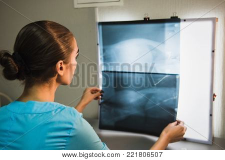 Back View of Vet Examining X-ray. Woman examining an animal radiography in veterinary clinic.