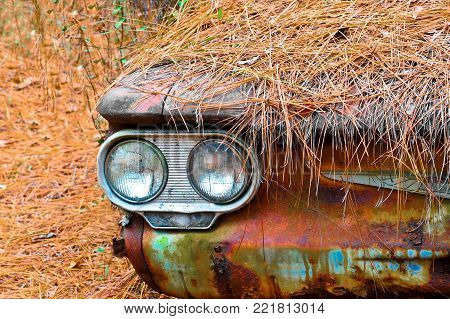 The Front Head Lights and Bumper of an old rusted out scrap car peaking out from under a thick layer of pine needles after being abandoned in the woods