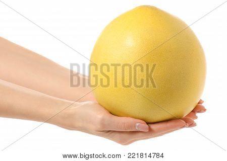Pamela fresh fruit in hand on white background isolation