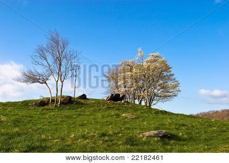 Serene hilltop in Spring