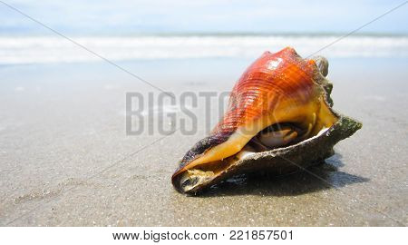 hermit crab on the beach vary beautiful
