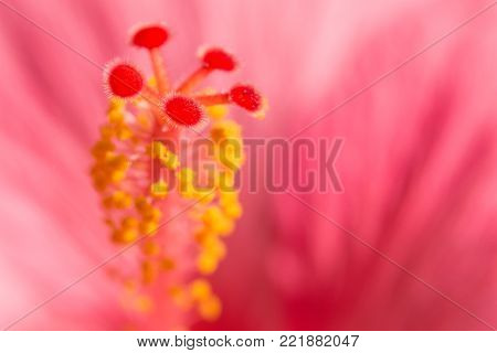 Floral blurred background with pink exotic tropical Hibiskus flower. Macro stock photo with selective focus point and shallow depth of field.