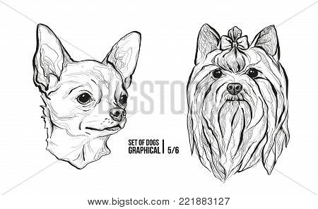 Set of portraits of dogs. Breeds Chihuahua and Yorkshire Terrier. Graphical vector illustration