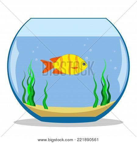 Colorful exotic fish in a fishbowl with seaweed and sand on the bottom. Vector illustration, flat