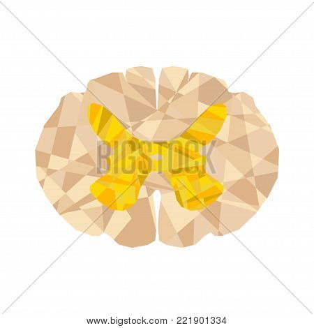 Human spinal cord polygonal geometric concept. Geometric abstract spinal cord cross section with triangular polygons, low poly background. Isolated. Central nervous system. CNS logo for medical design