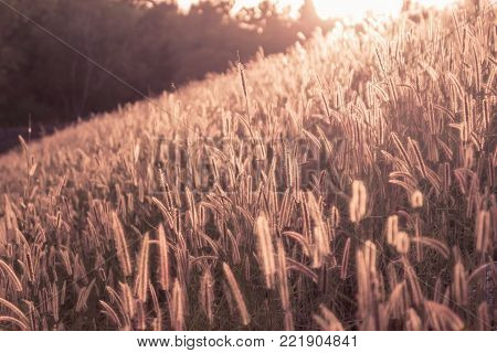Pictures of Lanscape, grass flowers in the meadow in the evening.