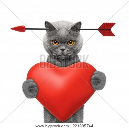 Cute cat is falling in love on valentines day. Isolated on white background