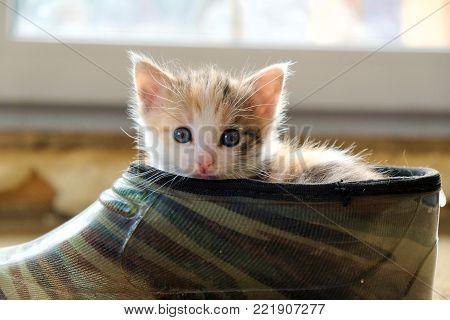 naughty little kitten climbed into the boot