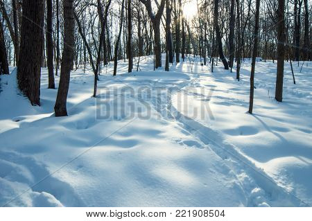Winter background beauty on earth on winter day with sun shining through snow covered trees in deep snow beautiful winter wonderland background photography conceptual healthy lifestyle and winter season vacation and travel with room for copy