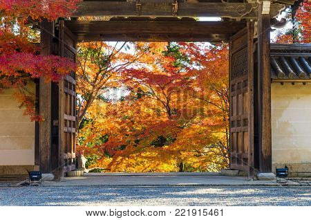 Japanese style entrance wooden door or gate to beautiful colorful Japanese maple garden in colorful autumn season at Nison-in Temple, a famous Buddhist Temple in Arashiyama, Kyoto Japan