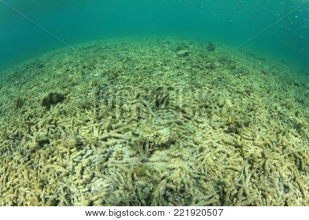 Dead coral destroyed by coral bleaching. Global warming, climate change