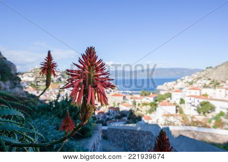 Torch Lily flower and panorama of Hydra port, an island in Peloponnese, Greece.