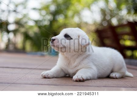 Small Cute Puppy Dog