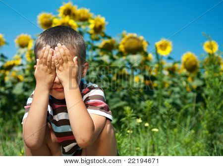 Little Plays Hide-and-seek In Sunflowers