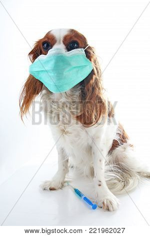 Sick dog puppy photo illustration. Animal pet doctor vet mask on puppy. Dog with injection vaccination. Animal pet dog vet on isolated white background. Dog sickness illness illustration. Pet health.