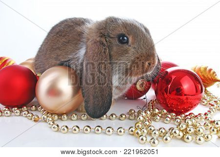 Christmas animals. Cute christmas rabbit. Rabbit bunny lop celebrate christmas with xmas bauble ornaments on isolated white studio background. Christmas pet animal photo. Cute.