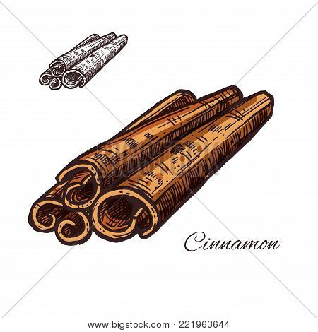 Cinnamon spice bark plant sketch icon. Vector isolated symbol of cinnamon sticks for culinary cuisine cooking or flavoring seasoning ingredient or grocery store and market design