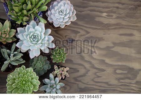 Succulent Plants For Garden