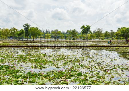 Amazing Park In Chiang Khruea,lotus Park At Sakon Nakhon, Thailand(thai Text That Appears In An Imag