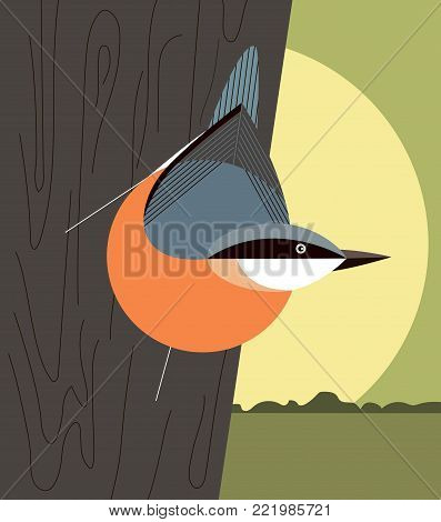 Nuthatch on the trunk of a tree on forest background