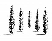 Set of Mediterranian, Italian or Tuscan cypresses illustration. Valley of trees of different sizes. Black sihlouette of coniferous evergreen Pencil pine isolated on white background. poster