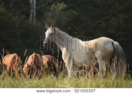 Horses with trees. Nature landscape. Nature background. Horse in Natural environment in sunshine. Horses in autumn meadow. Horses in pastrure. Mammal at dusk. Stallion at dawn. Horses in Outdoors at sunrise. Horses at sunset. Animal and sun rays.
