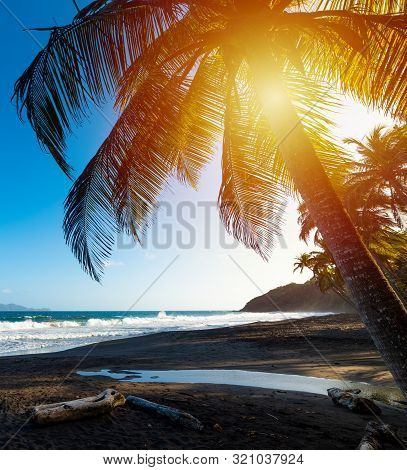 Palm Trees In Grande Anse Beach At Sunset In Guadeloupe, French West Indies. Lesser Antilles, Caribb