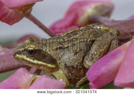 Macrophotography Of A Small Frog That Sits On A Flower Petal