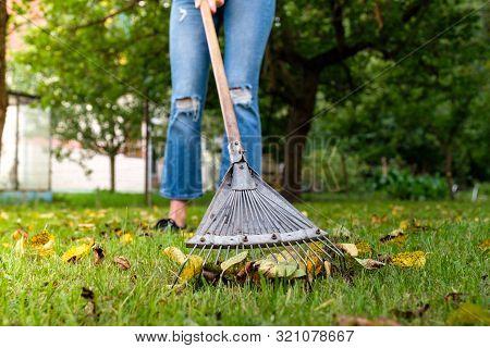 Raking Fallen Leaves In Garden. Gardener Woman Cleaning Lawn From Leaves In Backyard. Woman Standing