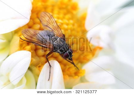 Big fly collects honey on a beautiful flower