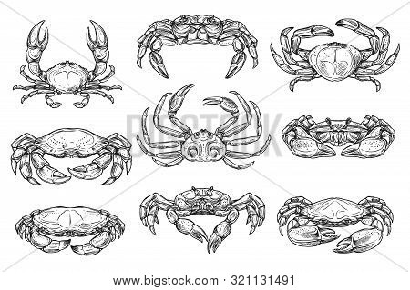 Underwater Crab Animal Isolated Sketches. Vector Different Crab With Long Claws, King And Hairy Crus
