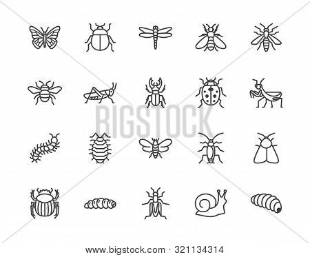 Insect Flat Line Icons Set. Butterfly, Bug, Dung Beetle, Grasshopper, Cockroach, Scarab, Bee, Caterp