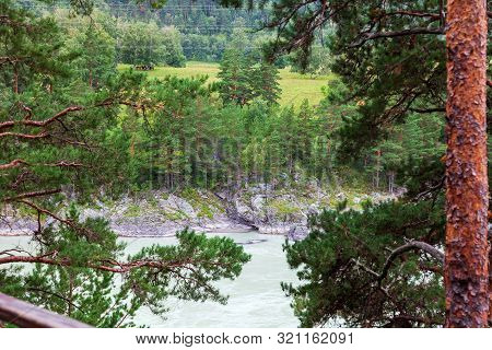 A Picturesque View Through The Branches Of A Coniferous Pine Forest On The Opposite Bank Of The Gree