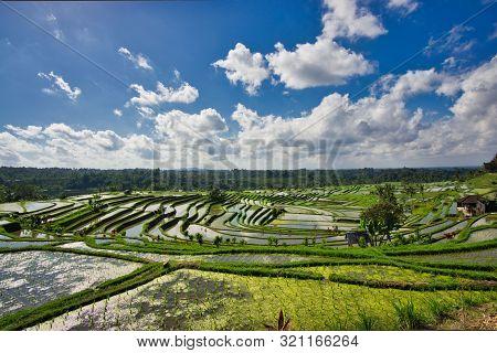 Bali Reisfeld Urlaub Reis Grün Himmel Wolken