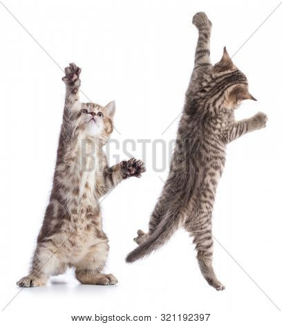 Funny young cats standing and hanging isolated