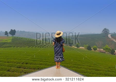 A Woman Tourist Is Sightseeing While Traveling Into Tea Plantation Field In Chiangrai, Thailand.