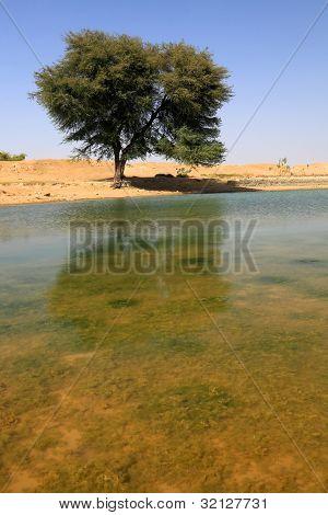 Oasis in Thar Desert, India, Asia