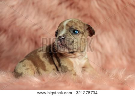 side view of a dog standing with his head twisted and with a sympathetic look on his face in a fluffy environment