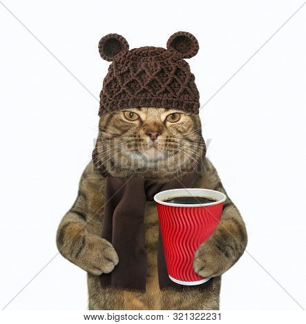 The Cat In Woolly Hat And Scarf Is Holding A Paper Cup Of Black Coffee. White Background. Isolated.