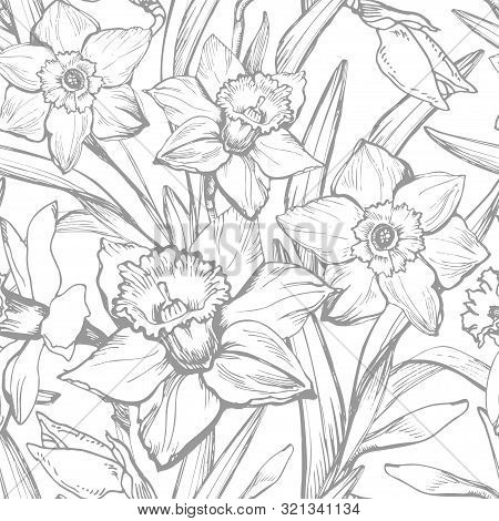 Hand Drawn Monochrome Botanical Vintage Vector With Narcissus, Daffodils Flowers. Elegant Seamless F