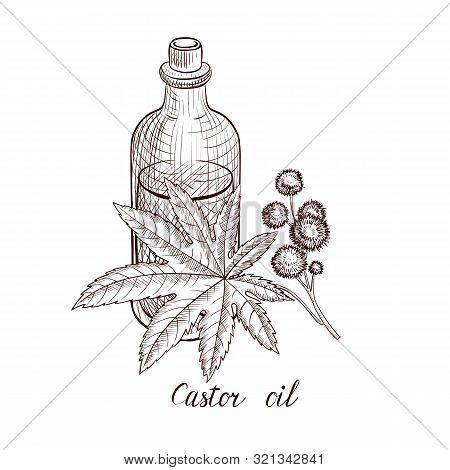Vector Drawing Castor Oil, Bottle Of Vegetable Oil And Ricinus Plant , Hand Drawn Illustration
