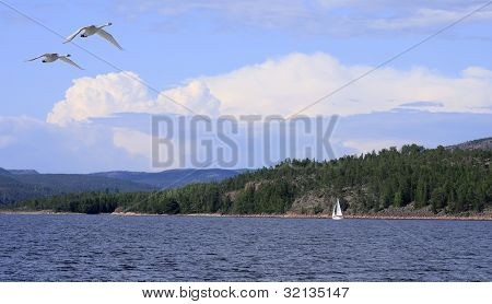 High Coast from the sea, birds and clouds. Sailboat at the coastline. poster