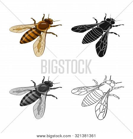 Vector Illustration Of Bumblebee And Wild Icon. Collection Of Bumblebee And Biology Vector Icon For
