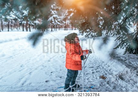A Little Boy 3-5 Years Old, Stands In Childrens Skiing In Winter, Looks Up At Green Tree, Looks Surp