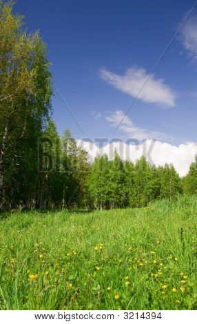 Beautiful Field, Forest And Sky