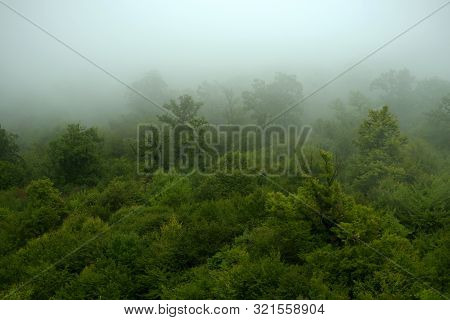 Beautiful Green Forest In Fog. Fog Covering A Part Of A Forest After The Rain.
