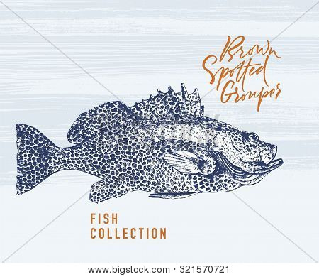 Delicates Fish. Brown Spotted Grouper. Hand Drawn With Brush And Ink. Delicious Meal Vector Illustra