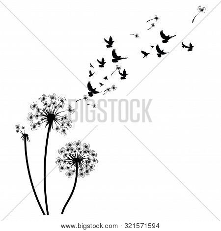 Silhouette Of A Dandelion With Flying Seeds. Black Contour Of A Dandelion. Black And White Illustrat