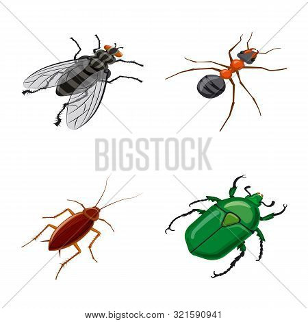 Isolated Object Of Insect And Fly Symbol. Collection Of Insect And Entomology Vector Icon For Stock.