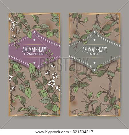 Two Color Labels With Boswellia Sacra Aka Frankincense And Commiphora Myrrha Aka Myrrh Sketch On Vin